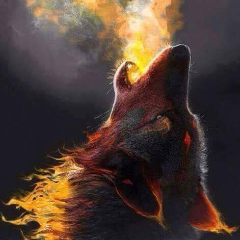 Santa Cruz Mountains nightly howl