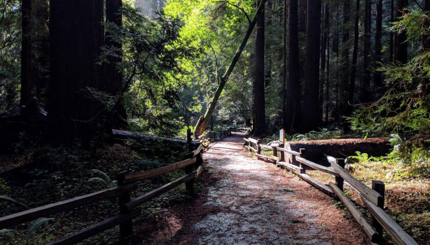 redwoods state parks