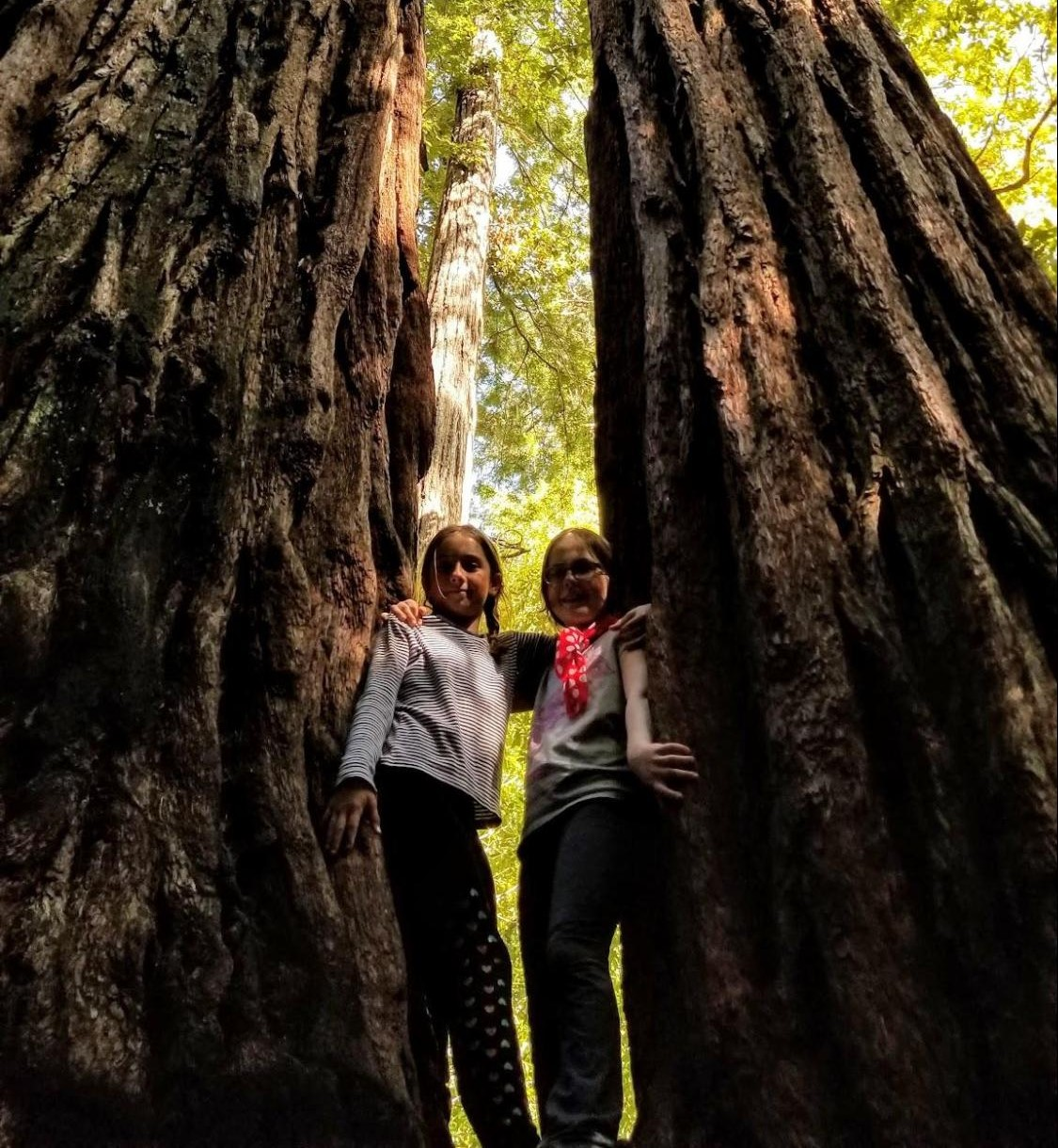 Jane Mulcaster Big Basin Redwoods State Park