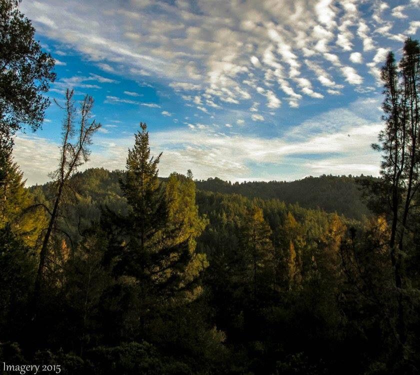 Big Basin Little Basin Redwoods