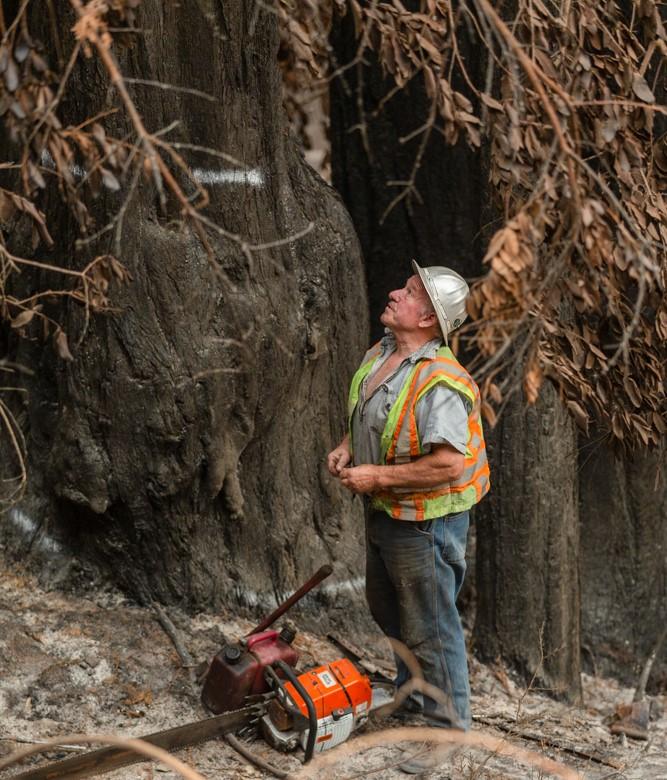 Bruce Baker Falls Danger Trees