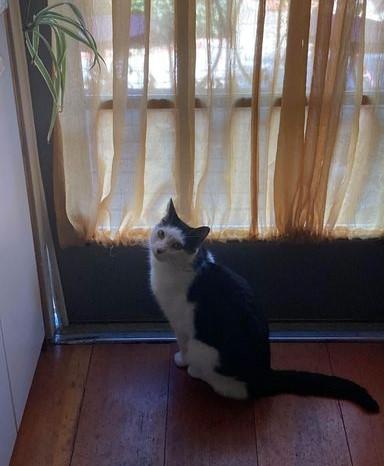 November 2020 Oreo the Cat found