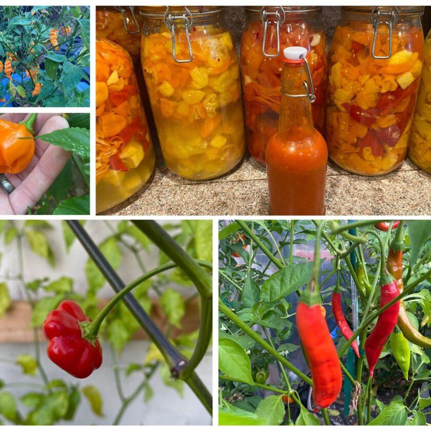 Santa Cruz Mountains Fermenter hot pepper sauce