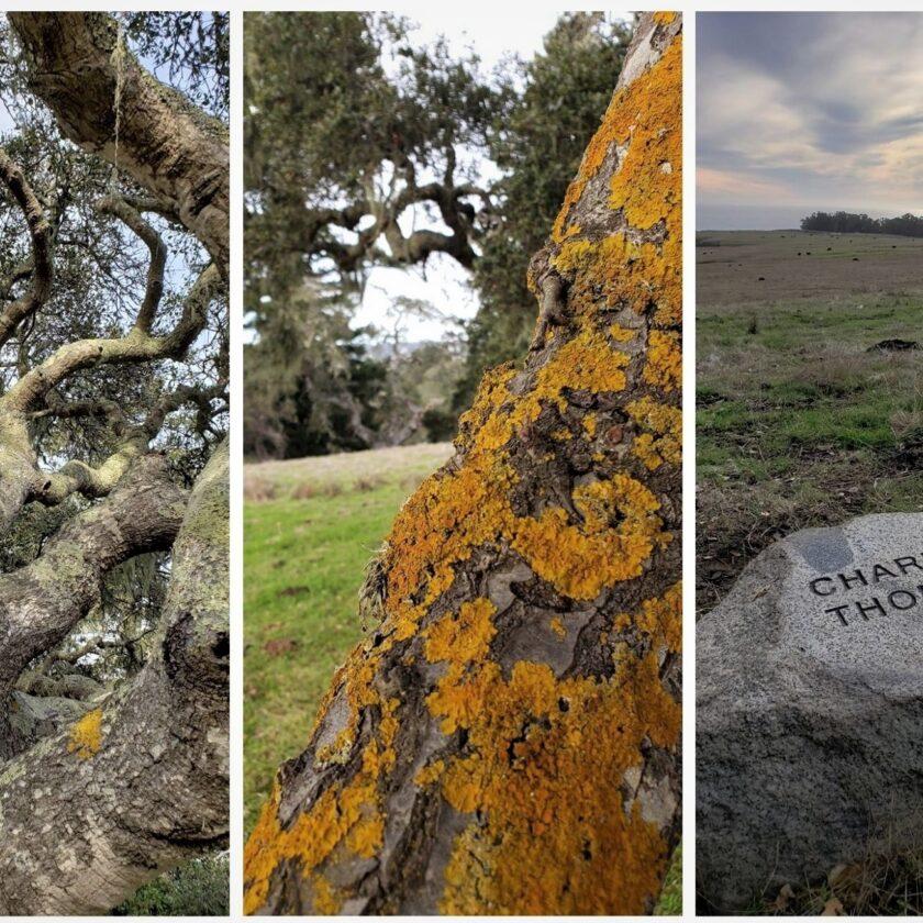 Moore Creek Preserve Santa Cruz