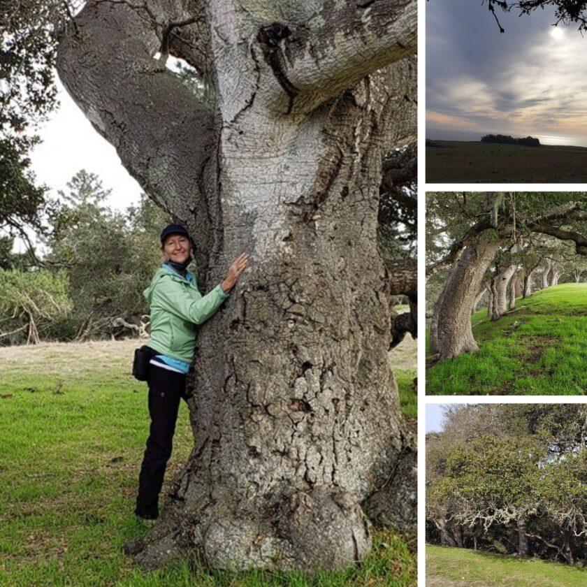 Moore Creek Preserve oak woodland