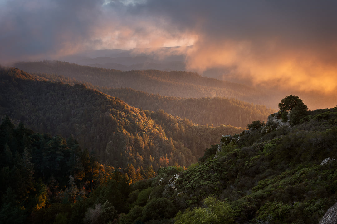 Sean McLean San Lorenzo Valley