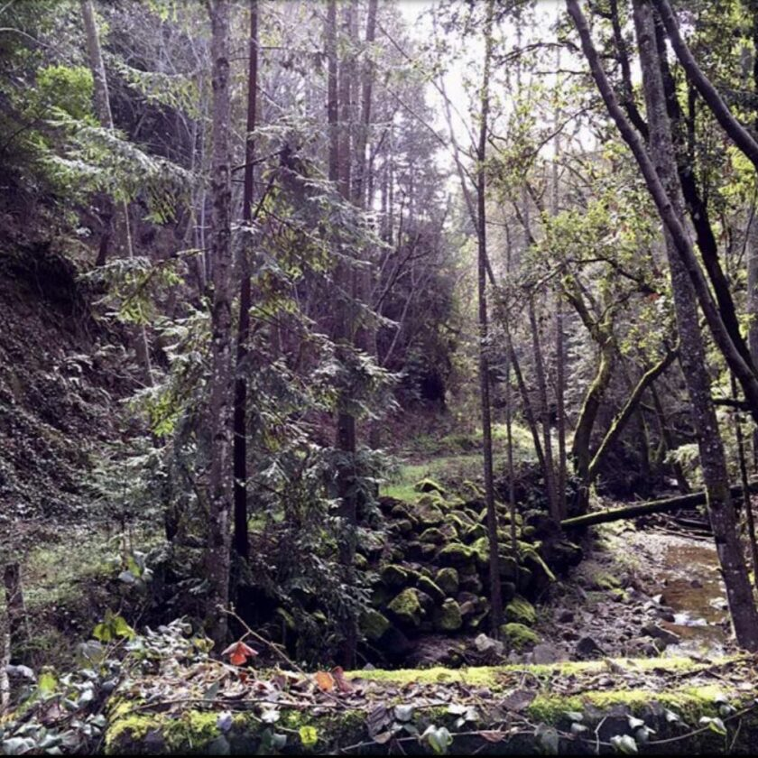 San Lorenzo Valley water drought wildfire