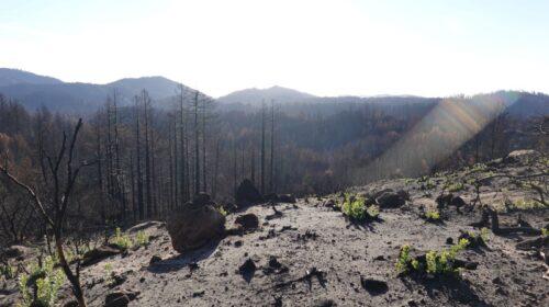 Santa Cruz Mountains CZU Lightning Complex Fire