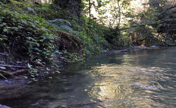 San Lorenzo Valley Water