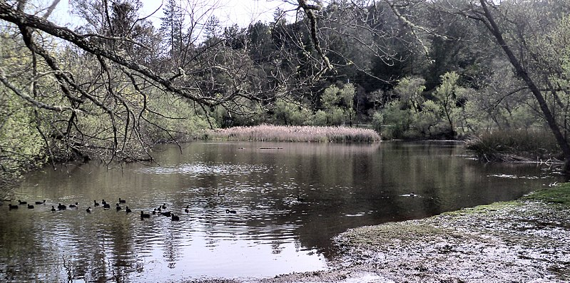 Quail Hollow Ranch Park The Pond