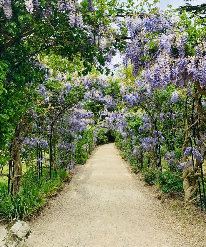 Wisteria Arbor pathway