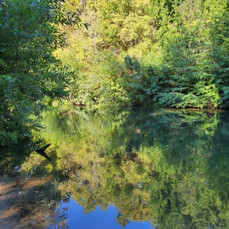 San Lorenzo River Ben Lomond California