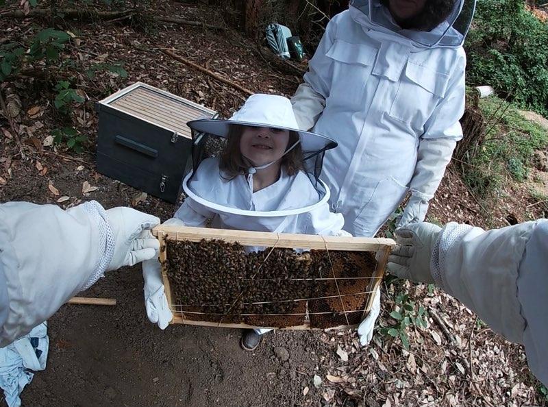 ben lomond bee wrangler